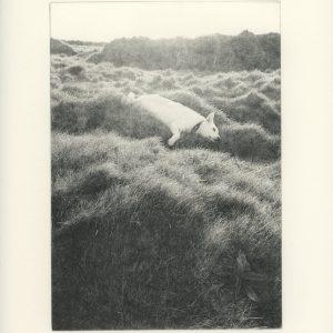 Ireland edition photogravure by Lidija Ivanek SiLa